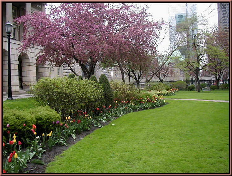 Osgoode Hall Tulips